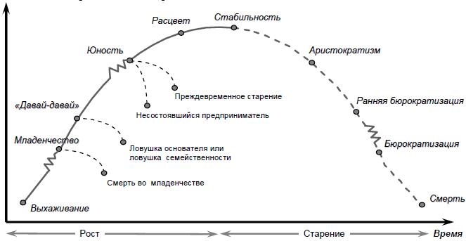 этапы развития организации картинки